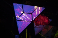 15.12.2018-PsychedelikLanguage-LeZoo-Projet390710-LisaFrisco-2